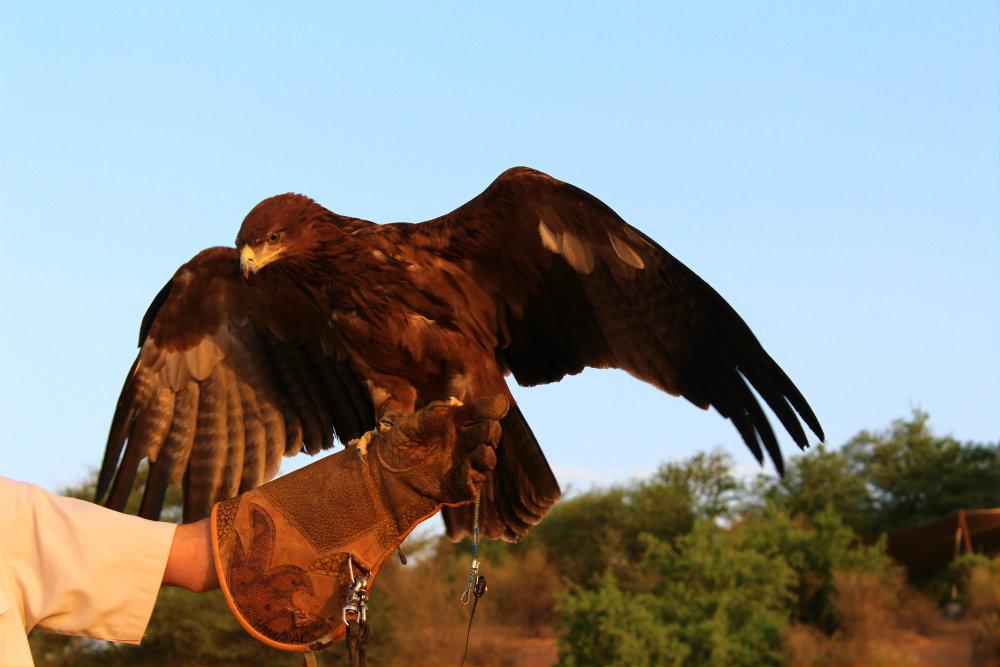 vulturdubai